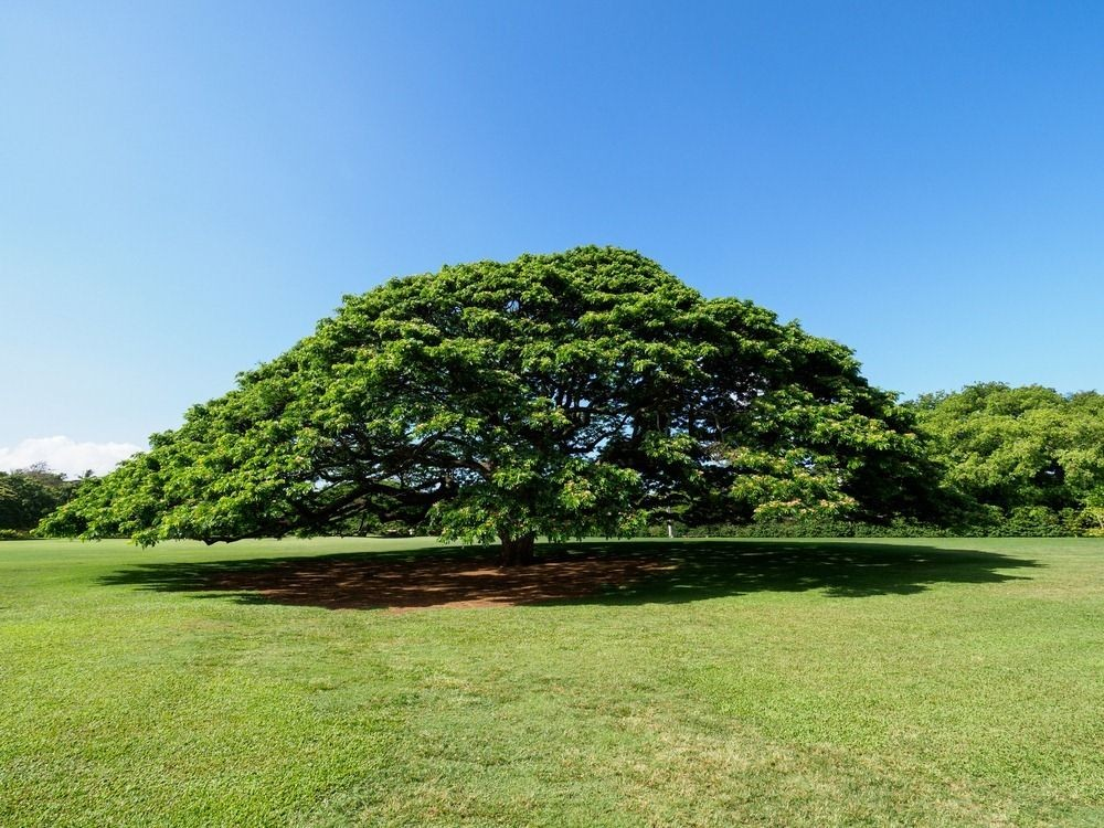 Hawaii: A Monuala Gardens és a Hitachi Fa