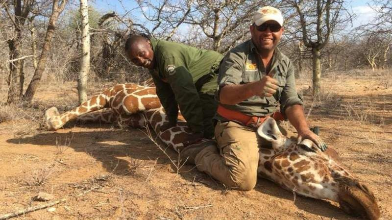 Kép: Giraffe Conservation Foundation